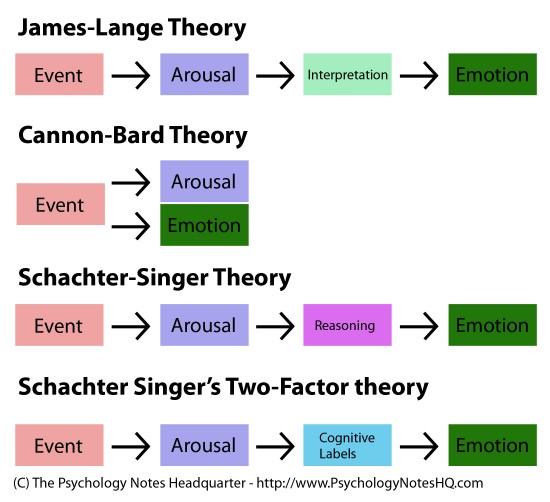 Theories Of Emotion In Psychology